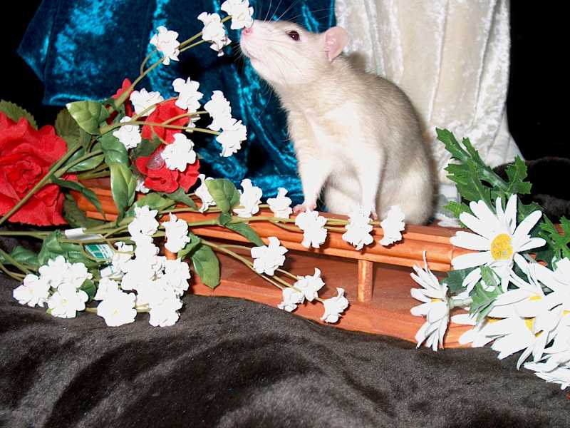 cedric smelling flowers