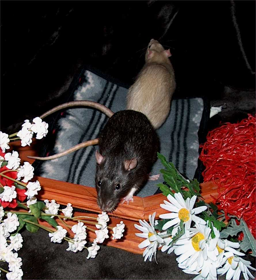 Chester smelling the flowers