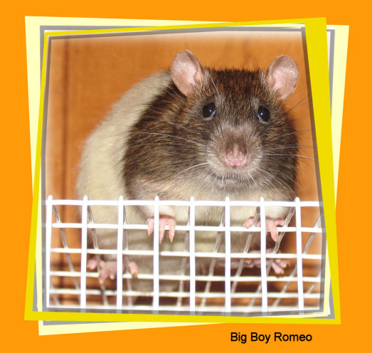 Big Boy Romeo