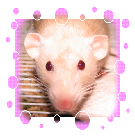 Pink Bubbles Mabelline