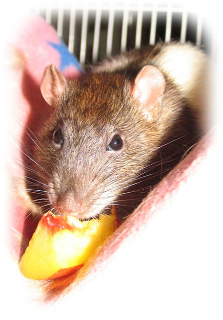 The Biter Romeo and his peach