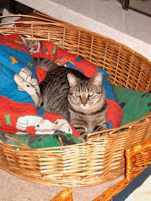 Sammy in a dog bed.